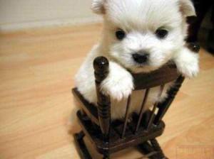 щенок на стуле